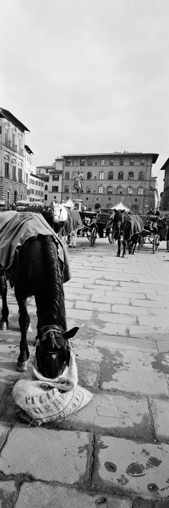 Florence_6x17_007