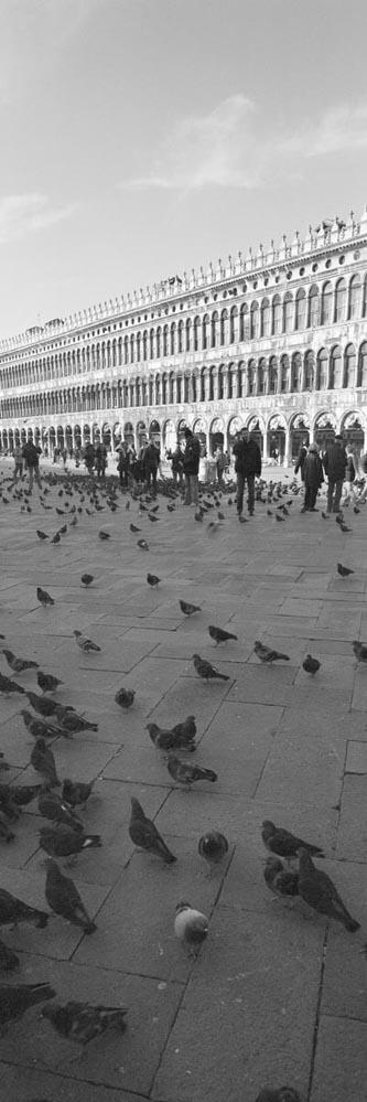 Venice_6x17_018
